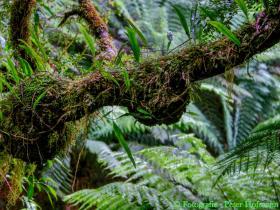 Regenwald Impressionen 01